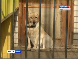 Бойцовских собак собираются лицензировать